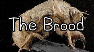 """The Brood"""