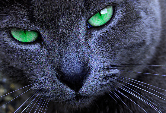 The Emerald Eyed Cat