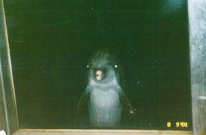 Scaryassdolphin
