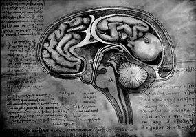 Brain fetus by aruthizar-d47sjys