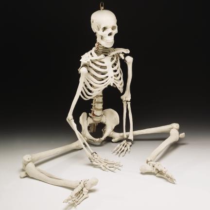 Imagen - Esqueleto.jpg | Wiki Creepypasta | FANDOM powered by Wikia
