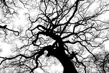 Tree-894903 1920