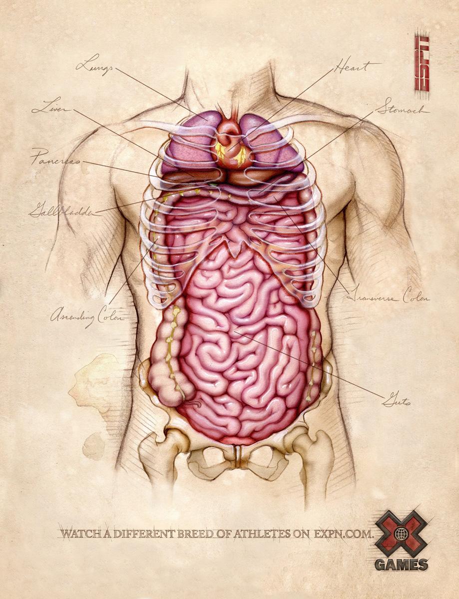 Anatomy Creepypasta Wiki Fandom Powered By Wikia