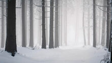 Fondo hd 169 bosque nevado niebla