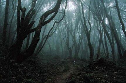 Oscuro-bosque-naturaleza-paisaje-31000