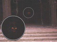 A close up picture of what looks like red eyes glowing in the dark.