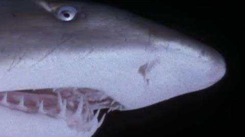 The Most Extreme - Super Sharks