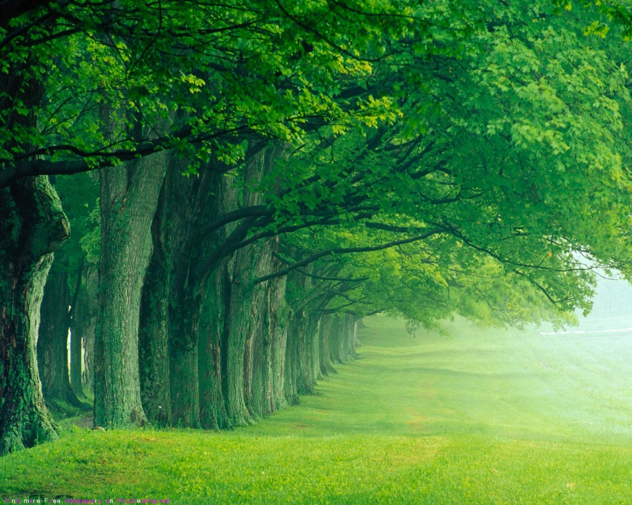 green forest wallpaperjpg