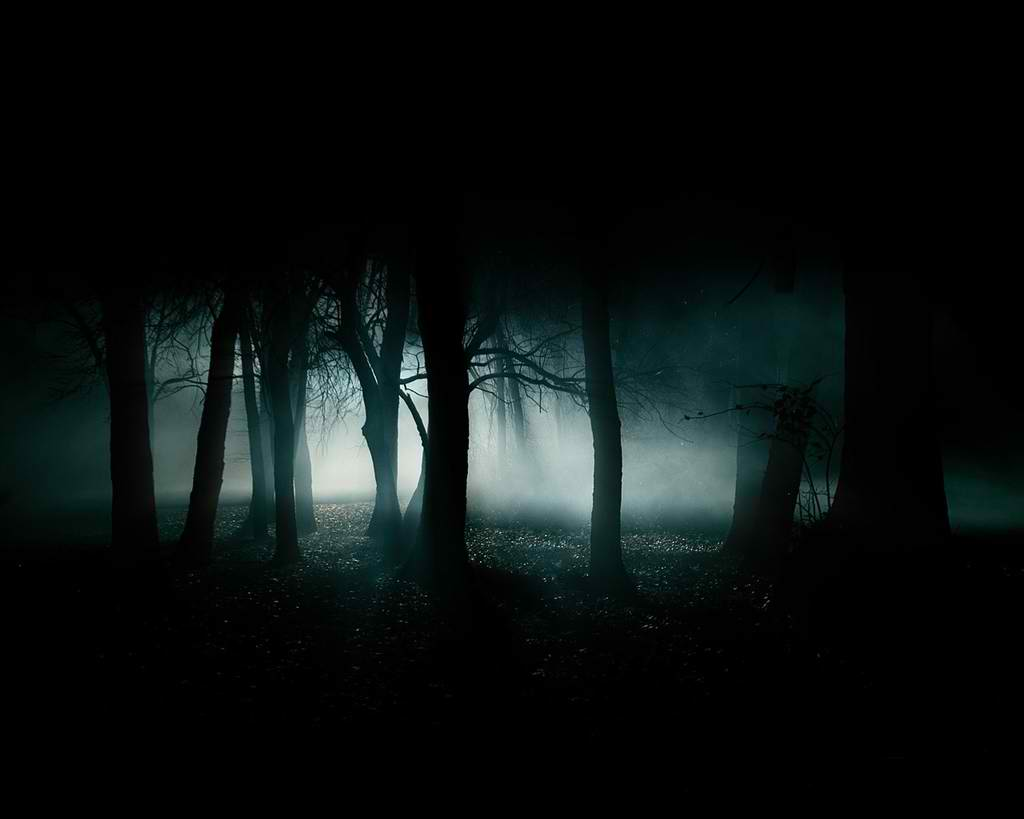 Image result for taxi in a dark forest