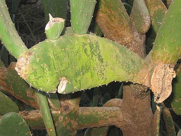 Cactus fish