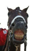 Horse-smile 2822158