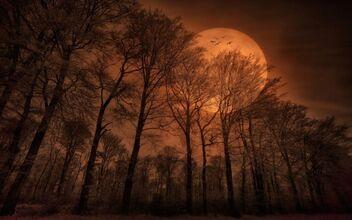 Golden moon light mysterious dark moon.1