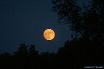 Orange-harvest-moon 57176
