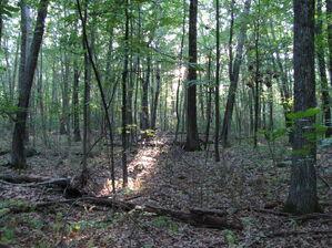 Estabrook Woods, Concord MA