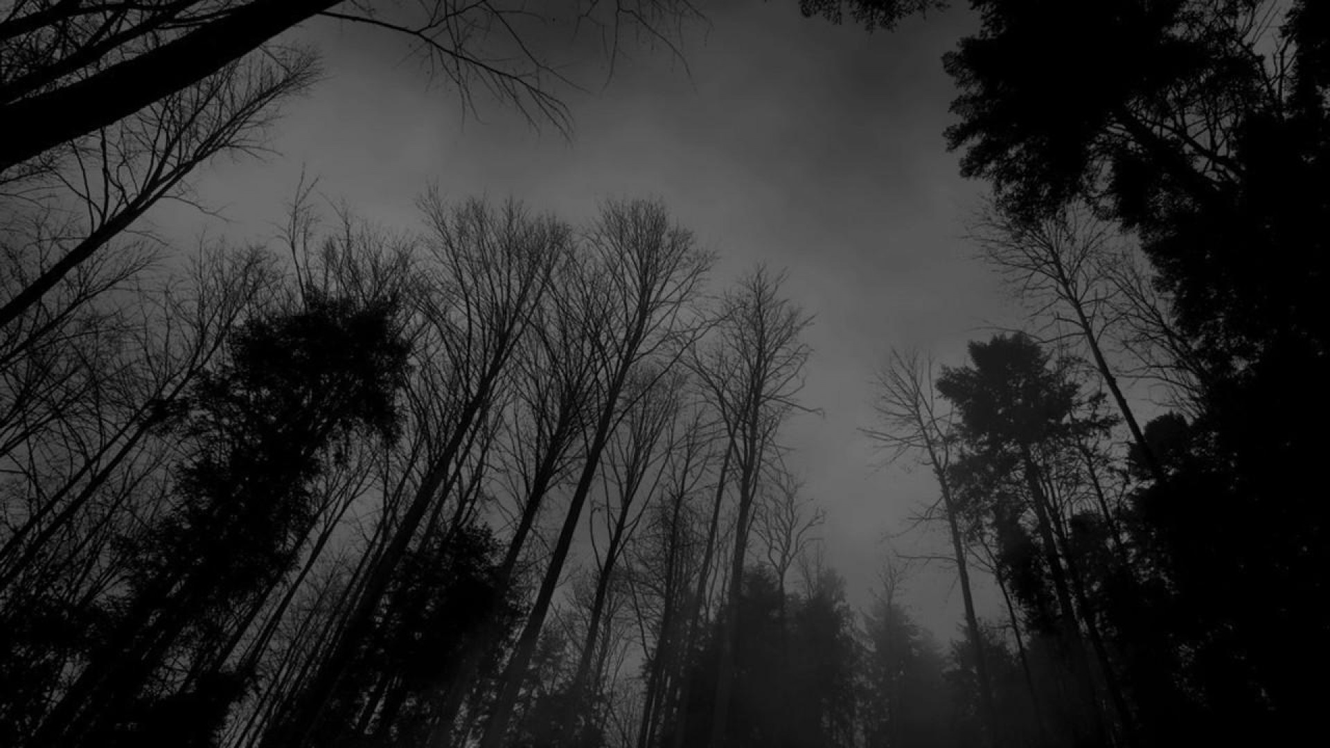 Forest Black White Dark Wallpaper