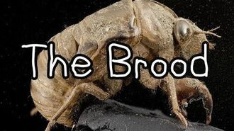 """The Brood""-0"