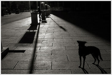 Dog-night-shadow