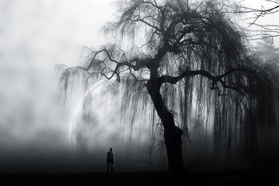 Image Tmp Alone Black And White Tree Favimcom 409135 906724688