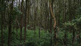 Eeektrees