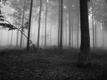 Slender forest