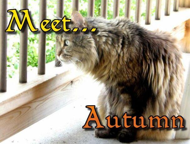 Meet... Autumn