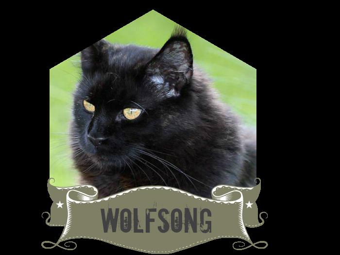 Meet wolfmommy