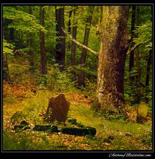 Graves-in-the-forest-1