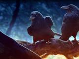 As the Raven Awakens