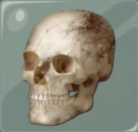Cráneo de Rache