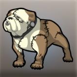 Fran's Dog