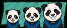 Growth 14 - Panda