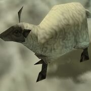 Female sheep 2