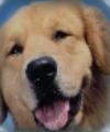 DogPortal