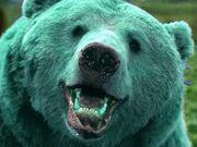 Blue-Bear-Africa