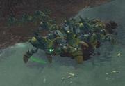 Crab Beetle Procreation