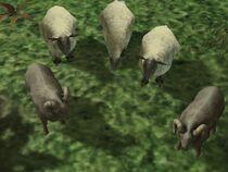 Sheep templ