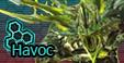 Havoc icon 2