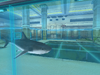 Aqua-Shark