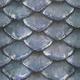 Scale fish01