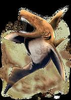Акула пустыни большая