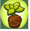 Sun-kissed Herb Seedling