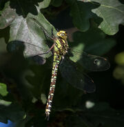 Southern Hawker 7564