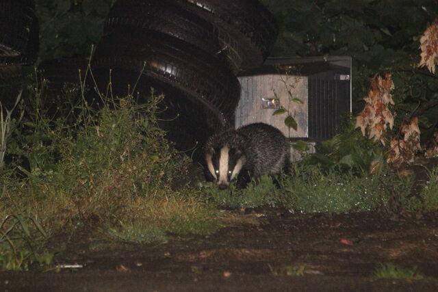 File:Park Hill Wildlife.jpeg