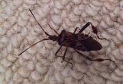 Bug in house 17 Nov