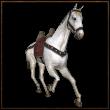 Horseico