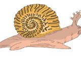 Sarmatian Sea Snail