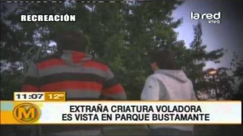 Extraña criatura voladora es vista en Parque Bustamante