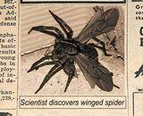 Winged Spider
