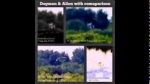 Repost Of Encounters With Dogman & Bigfoot With Pictures