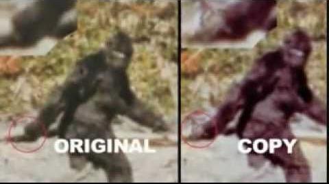 Patterson Gimlin Bigfoot Film- Bill Munns Analysis